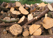Main_thumb_log_pile_4210098