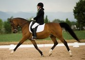 Main thumb dressage horse in extended trot